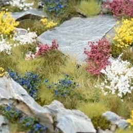 Set de fleurs sauvages