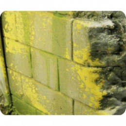 Exemple Effet d'environnement moisissure et lichen