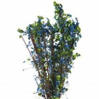 Arbustes 40mm